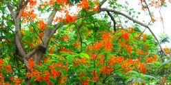 Pondichery - 008
